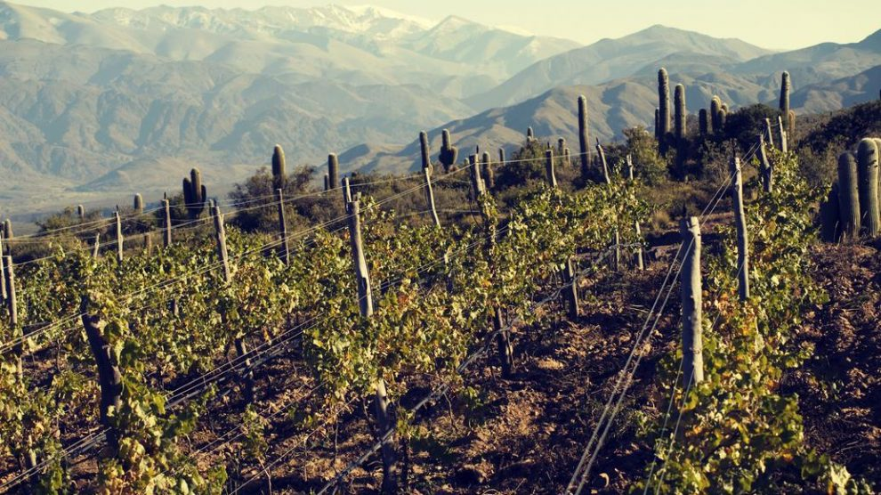 Which of these wine routes do you know, beyond Cuyo?