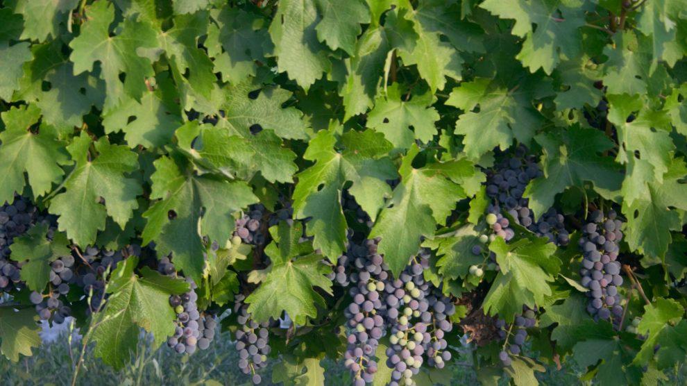Uvas com história: 5 vinhos a recordar